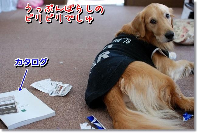 DSC_0003_20120111214517.jpg