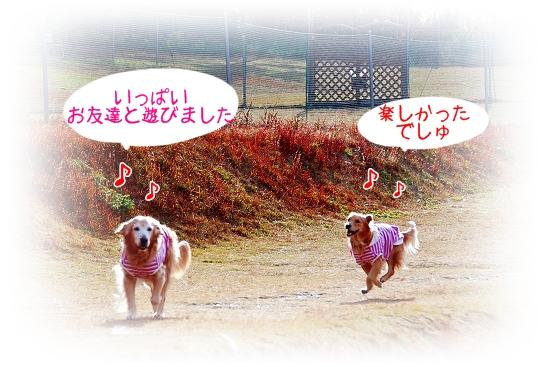 DSC_0004_20101215222258.jpg