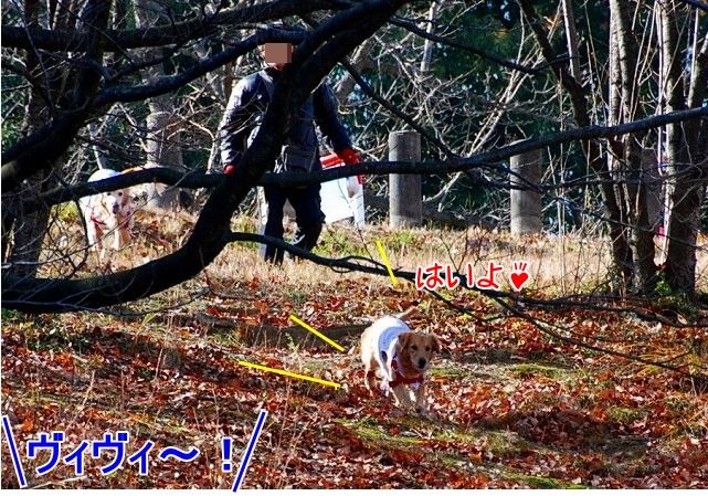 DSC_0004_20110204222612.jpg