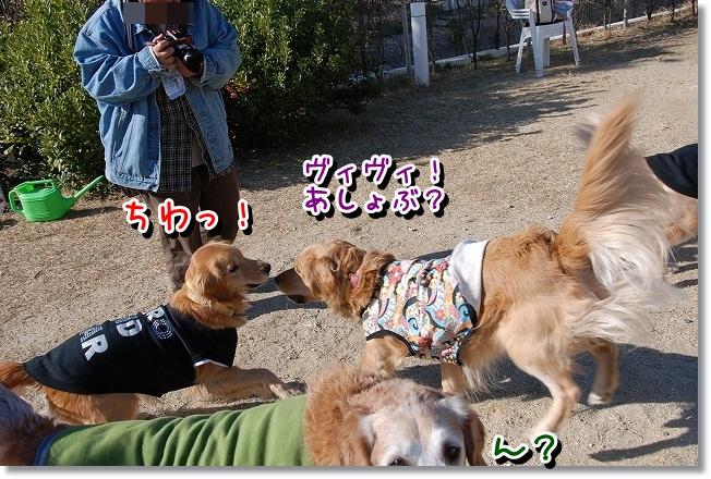 DSC_0004_20111220181656.jpg