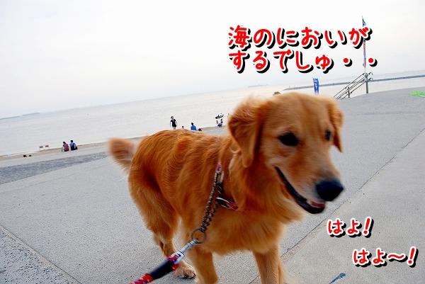 DSC_0005_20110810174840.jpg