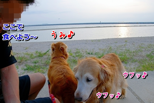 DSC_0006_20110810174840.jpg