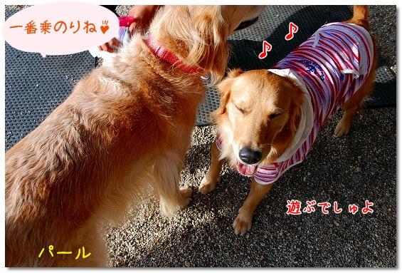 DSC_0007_20101218180833.jpg