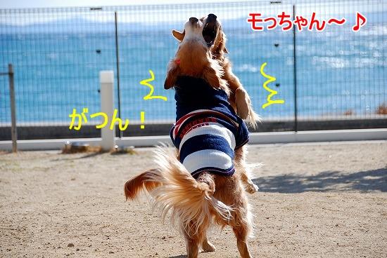 DSC_0007_20110131210214.jpg