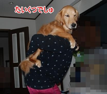 DSC_0007_20110601193104.jpg