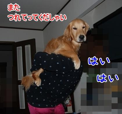 DSC_0008_20110601193103.jpg