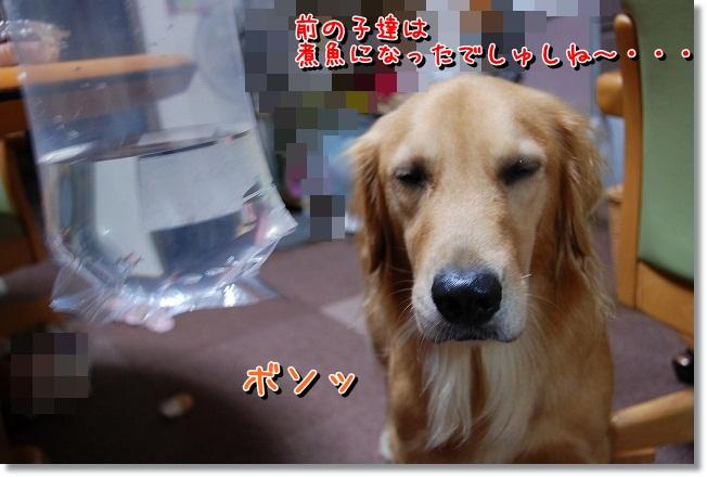 DSC_0008_20111006195911.jpg
