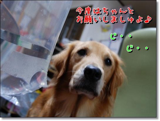 DSC_0009_20111006200007.jpg