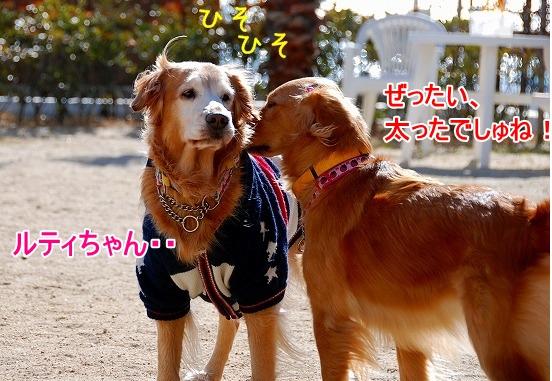 DSC_0010_20110131210212.jpg
