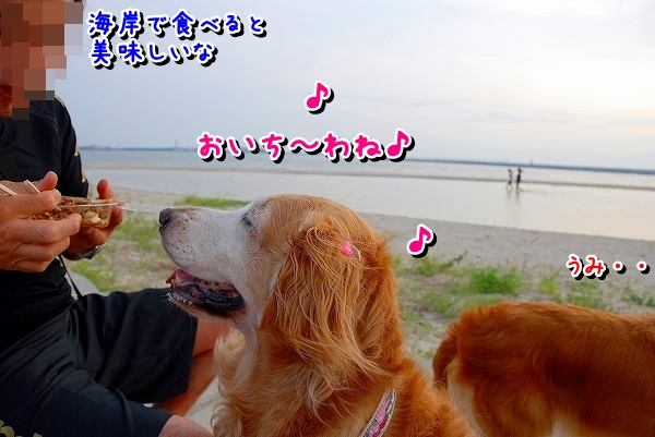 DSC_0010_20110810174819.jpg
