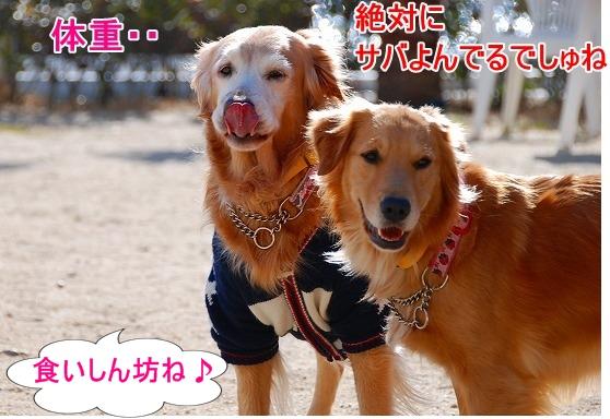 DSC_0011_20110131210210.jpg