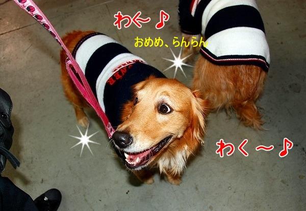 DSC_0011_20110207011107.jpg
