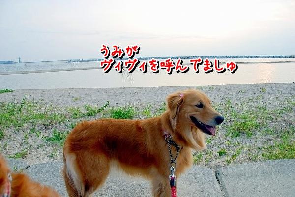 DSC_0011_20110810174909.jpg