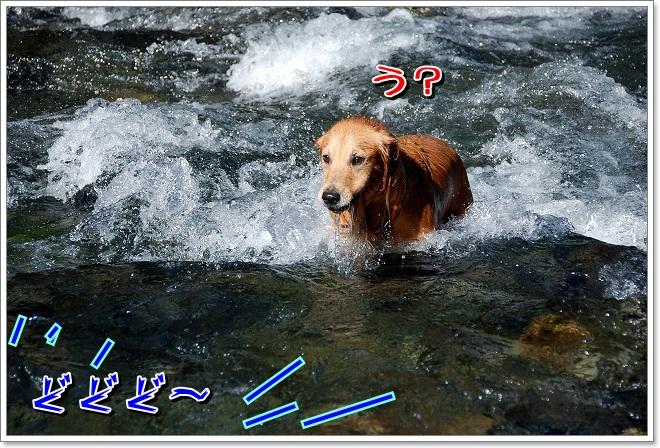 DSC_0011_20110925002742.jpg