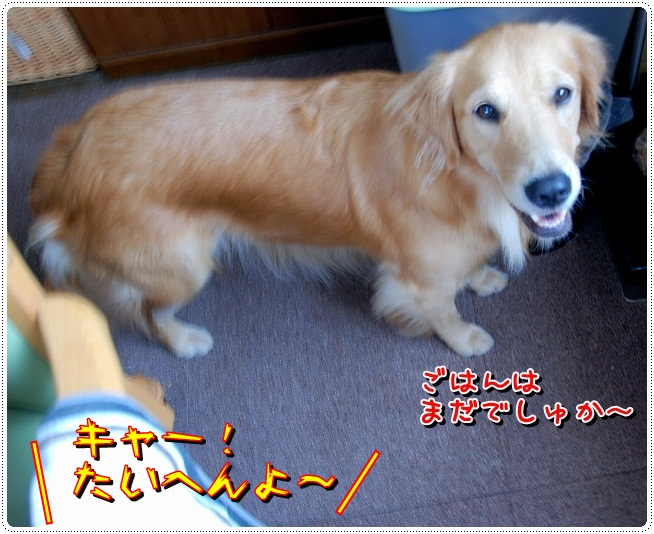 DSC_0011_20110930192654.jpg