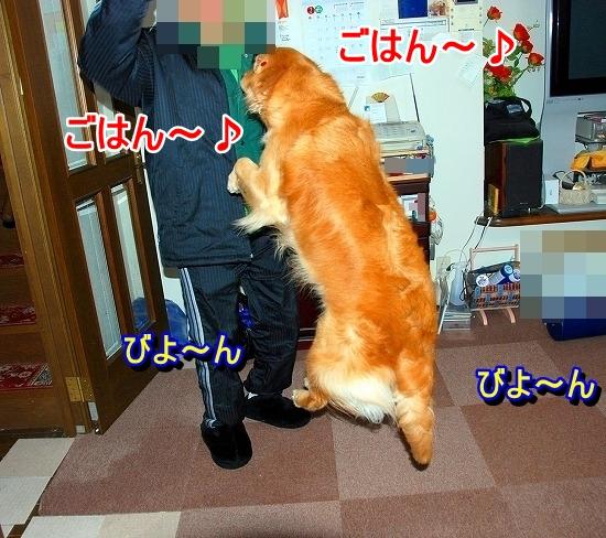 DSC_0013_20110519173653.jpg