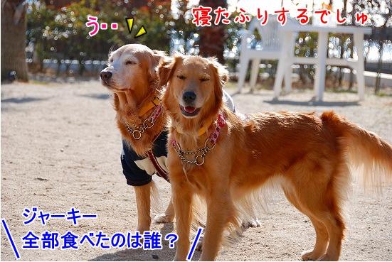 DSC_0014_20110131210302.jpg