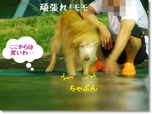 DSC_0015_20100903215812.jpg