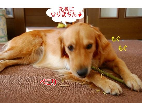 DSC_0015_20101207215942.jpg