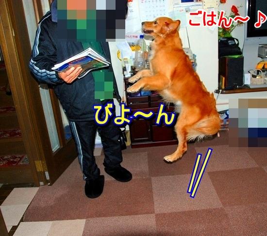 DSC_0015_20110519173652.jpg