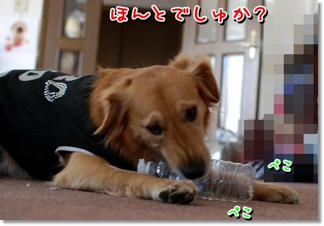 DSC_0015_20120111214817.jpg