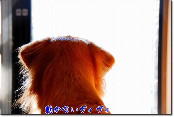DSC_0016_20101130220901.jpg