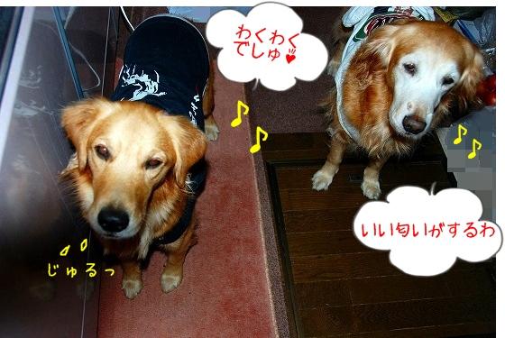 DSC_0016_20101203152422.jpg