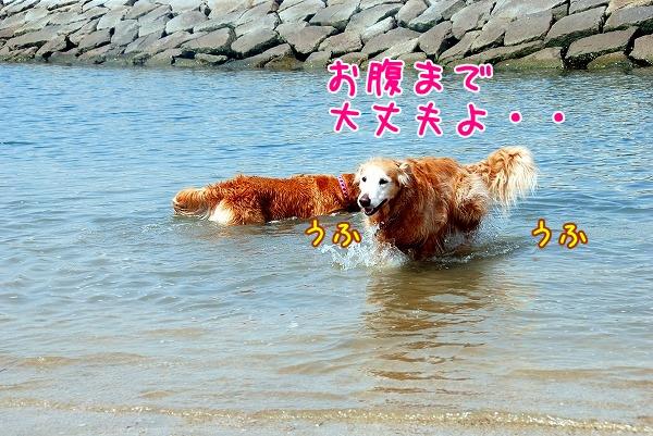 DSC_0016_20110505012645.jpg