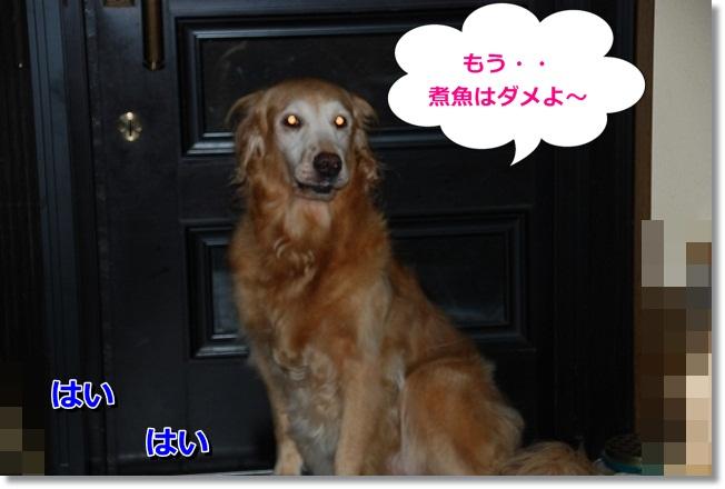 DSC_0016_20111006200006.jpg