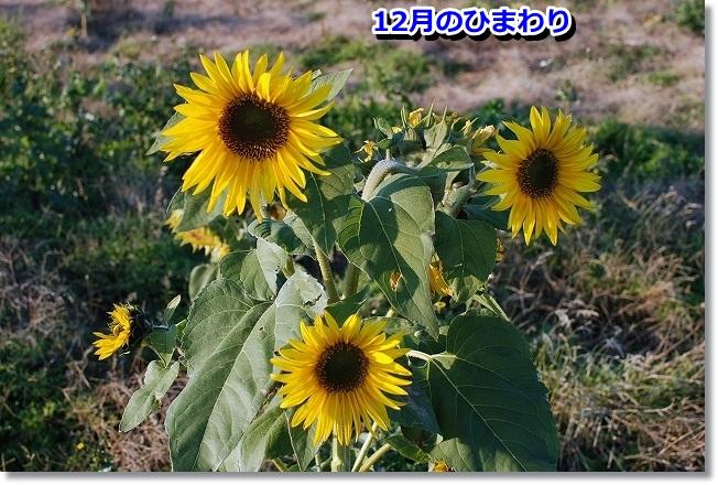 DSC_0016_20111212164241.jpg