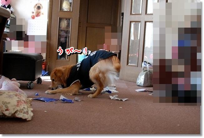 DSC_0016_20120111214817.jpg