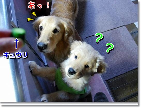 DSC_0018_20120227220852.jpg
