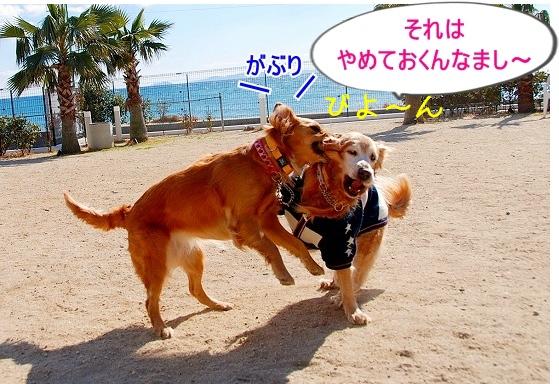DSC_0019_20110131210301.jpg