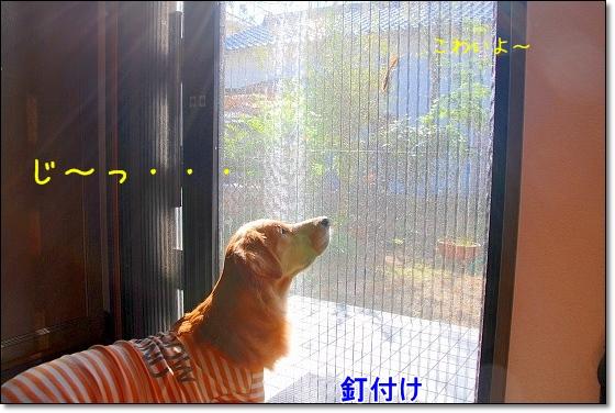 DSC_0020_20101130220900.jpg
