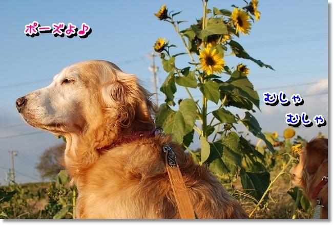 DSC_0023_20111212164239.jpg