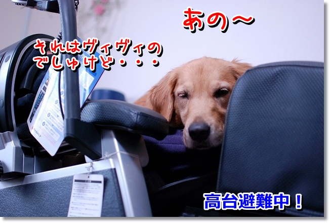 DSC_0023_20120203131644.jpg