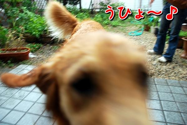 DSC_0024_20110819235304.jpg