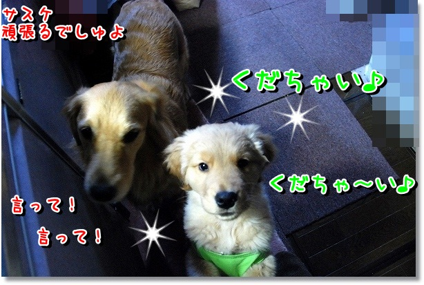 DSC_0024_20120227220852.jpg