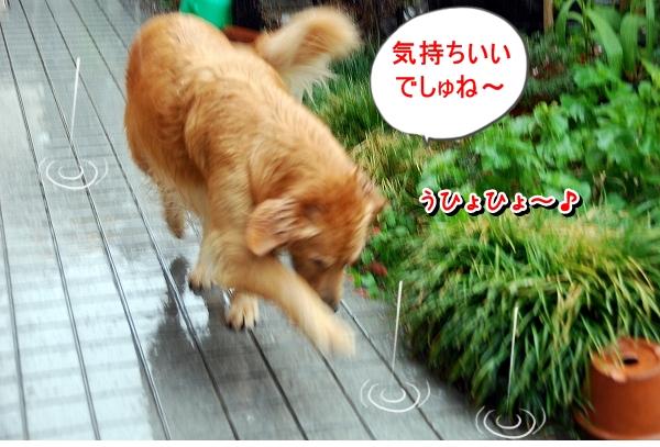 DSC_0026_20110819235304.jpg
