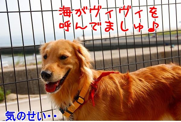 DSC_0027_20110509005306.jpg