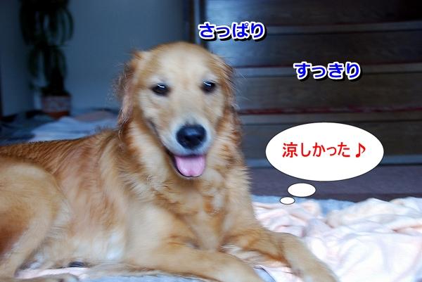 DSC_0028_20110819235304.jpg