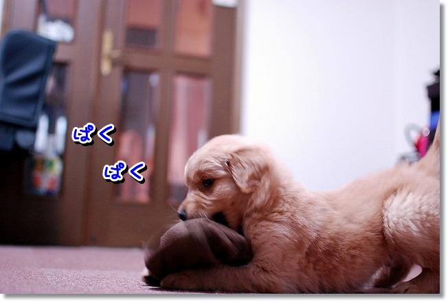 DSC_0028_20120203131644.jpg