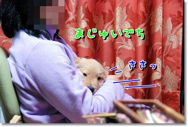 DSC_0028_20120226162934.jpg