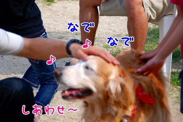 DSC_0029_20110509005304.jpg