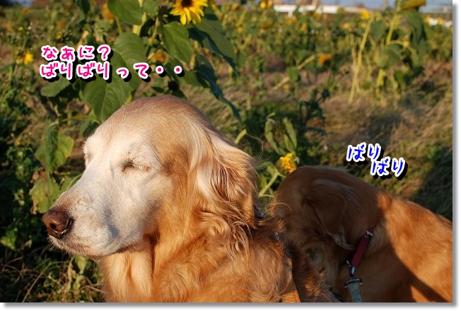DSC_0029_20111212164310.jpg