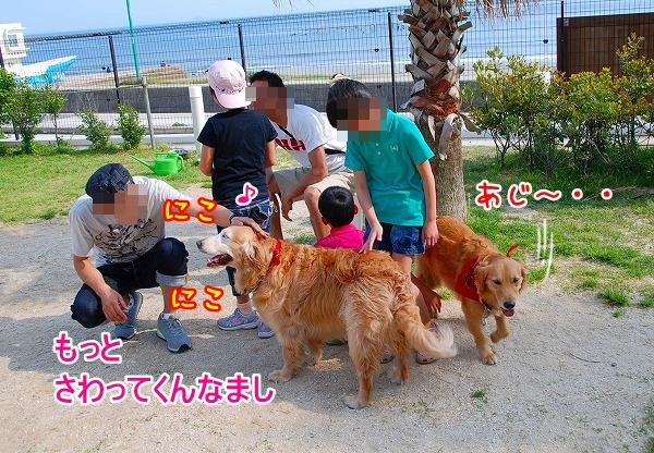 DSC_0030_20110509005344.jpg