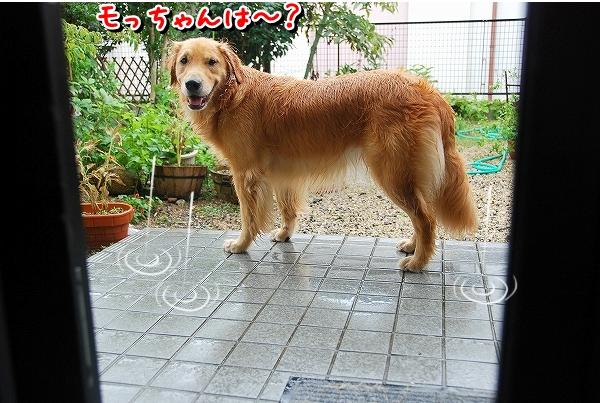 DSC_0030_20110819235340.jpg