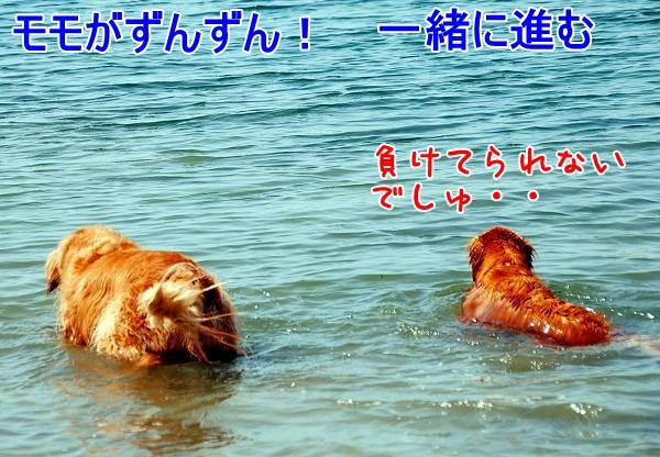 DSC_0031_20110505222632.jpg
