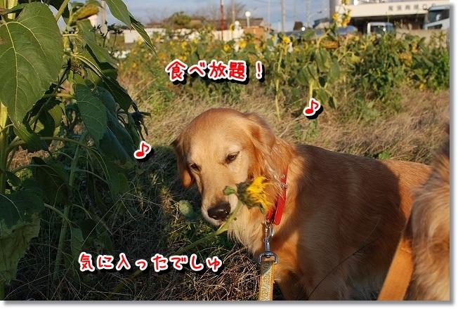 DSC_0031_20111212164310.jpg