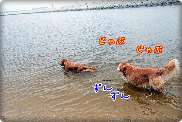 DSC_0033_20110601193149.jpg